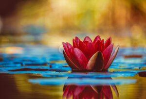 water lily, flower, botany-3784022.jpg
